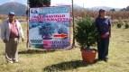 Alertan que árboles de Navidad importados traen plagas