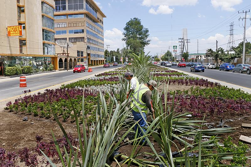 Trabaja toluca en el embellecimiento de accesos for Jardin hidalgo